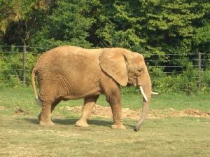Elephant the Giant
