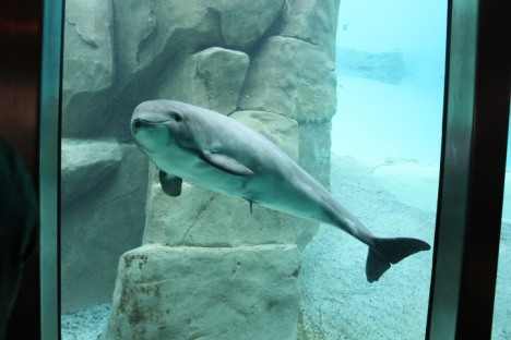 Vancouver Aquarium: Dolphin